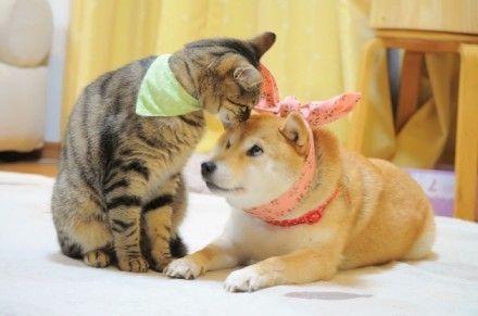 宠物交流社区