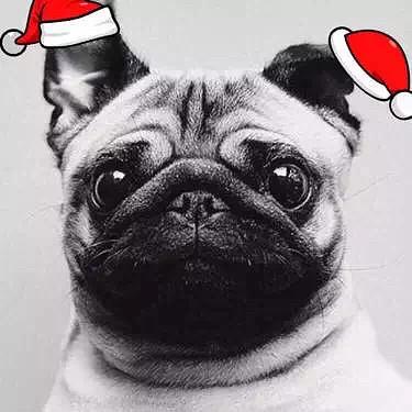 微信头像加圣诞帽