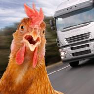 鸡鸡过马路
