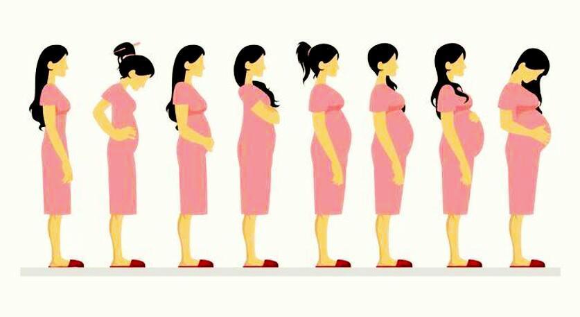 怀胎必备软件
