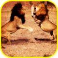 非洲狮模拟器游戏