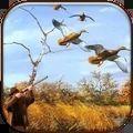 真实野鸭狩猎